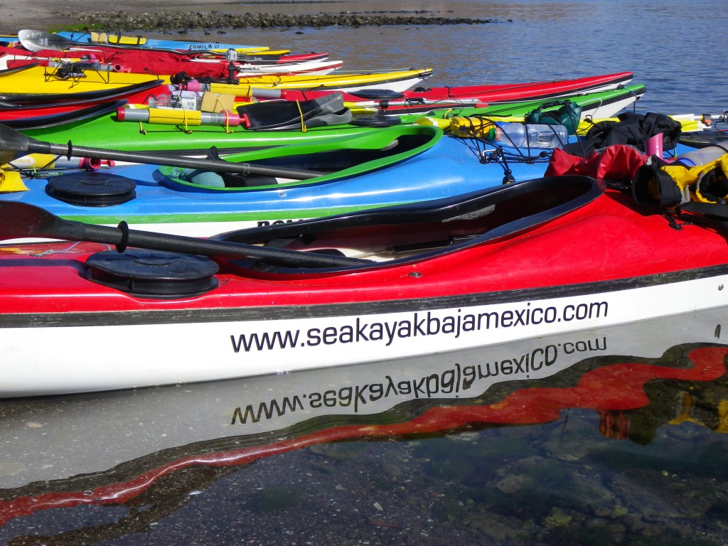 Line up of Kayaks in the water