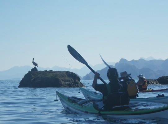 Pelican Paddlers