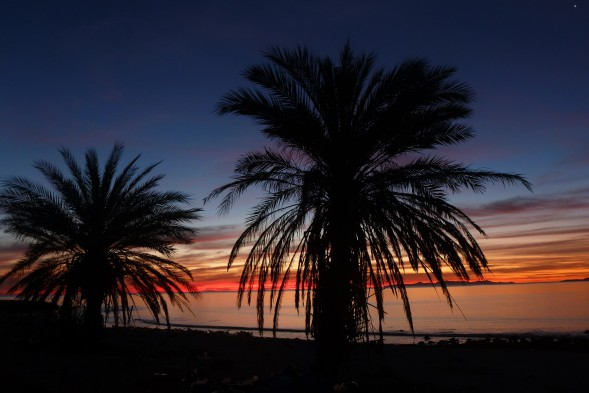 sunrise with palm trees