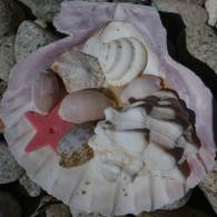 1100089beach treasures.5