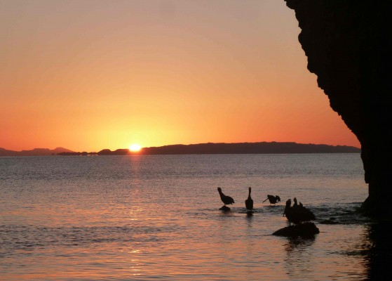 sun rises over Monserrate Island while pelicans preen