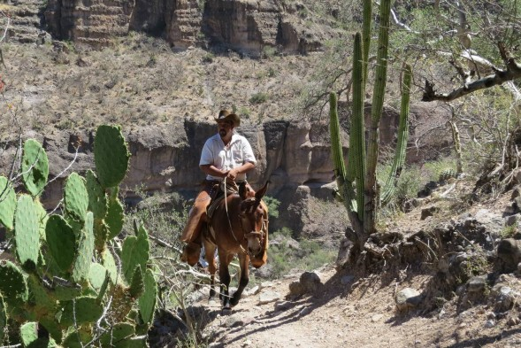 Lupe rides his mule between cacti