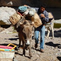 Tete loads a burro